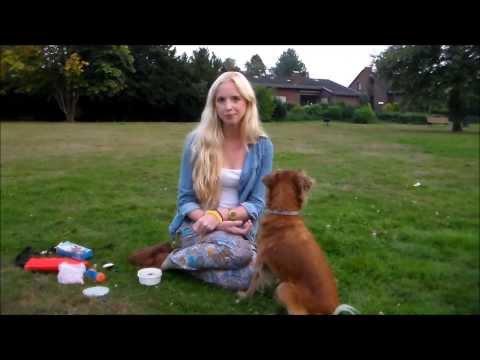 Clickertraining! Erste Übungen mit dem Clicker. Hundetrick. Hundekanal.