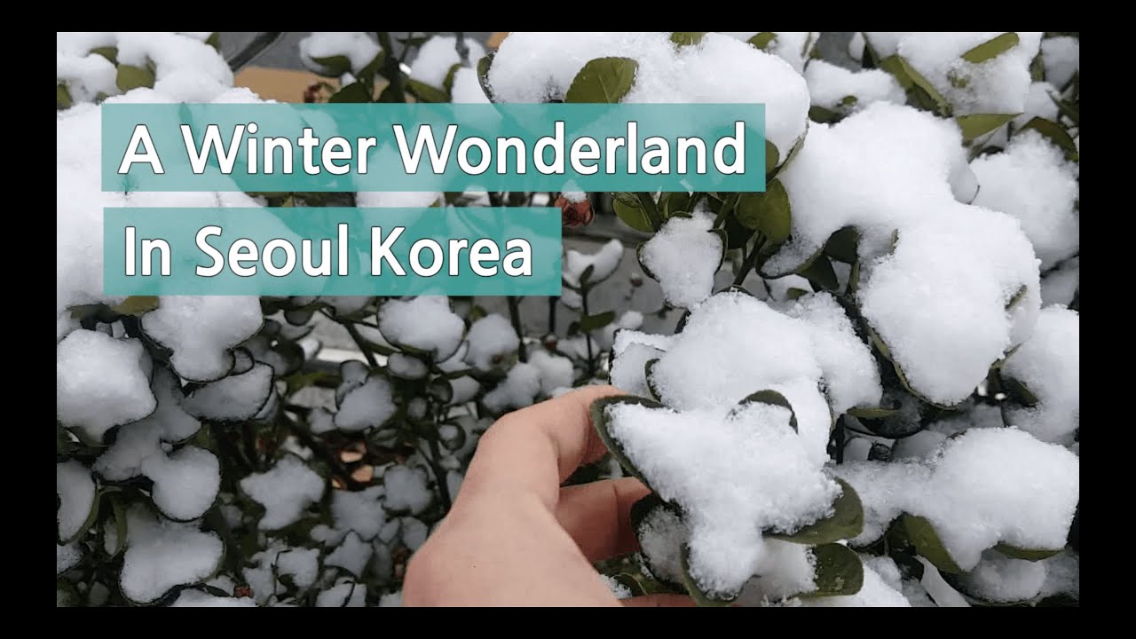 Life in Korea: Snow day in Seoul Korea