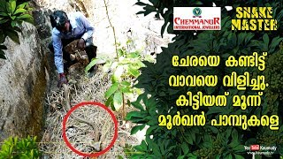 People called Vava after seeing Rat snake; got three Cobras instead | Snakemaster EP 428