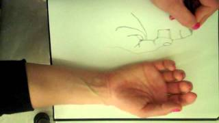 Basic contour line drawing of the hand.