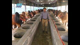 ঈদুল আজহা সামনে রেখে গরুর খামারিরা ব্যস্ত    ETV News