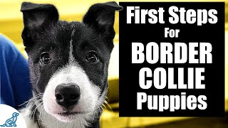 Border Collie Puppy Training  10 Skills To TEACH FIRST!