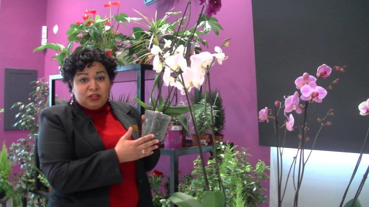 Com cuidar una orquidea - Como cuidar orquideas en maceta ...