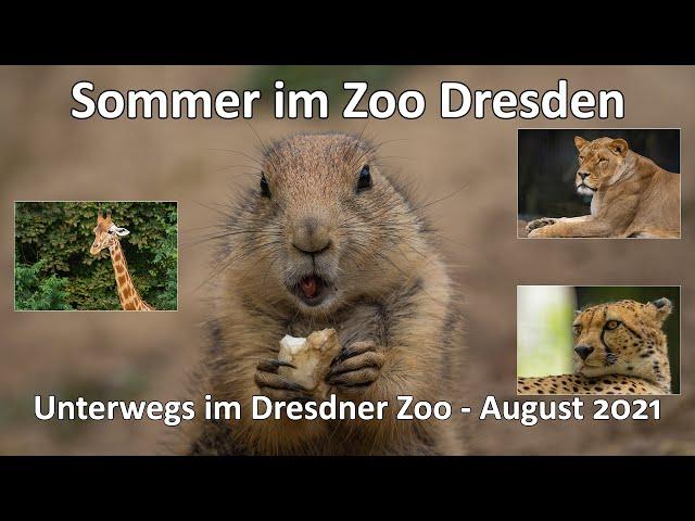 Sommer im Zoo Dresden - Nach 30 Jahren zurück im Dresdner Zoo - GoPro 9 - Sony A6600 - SEL200600G