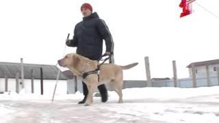 Собака поводырь даже окончила университет