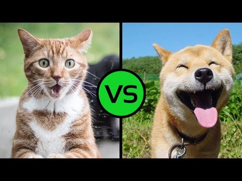ZOOLAND - CATS VS DOGS !!! FUNNY ANIMALS COMPILATION 2018 !!! 🐶 🐱 😂