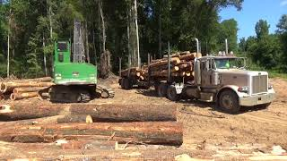 Loading pine pulpwood on a Peterbilt log truck