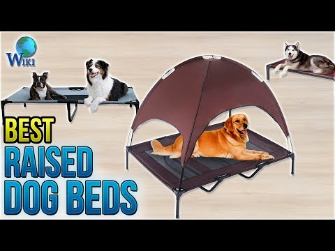 10-best-raised-dog-beds-2018