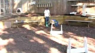 Dog Tricks - Flyball