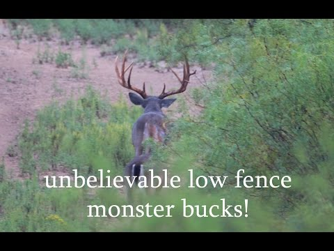 The Great Outdoors - South Texas Deer hunting!