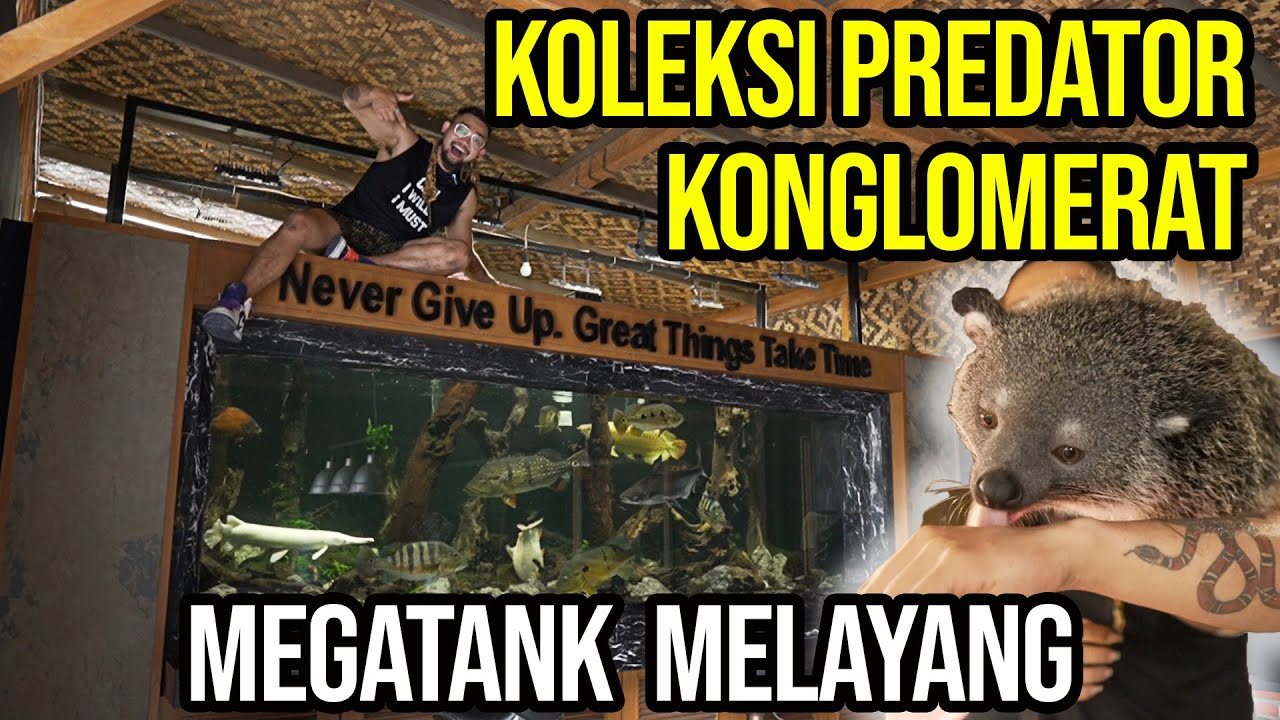 Download KONGLOMERAT!! MEGATANK DAN BERUANG PELIHARAAN SULTAN CIANJUR !!!
