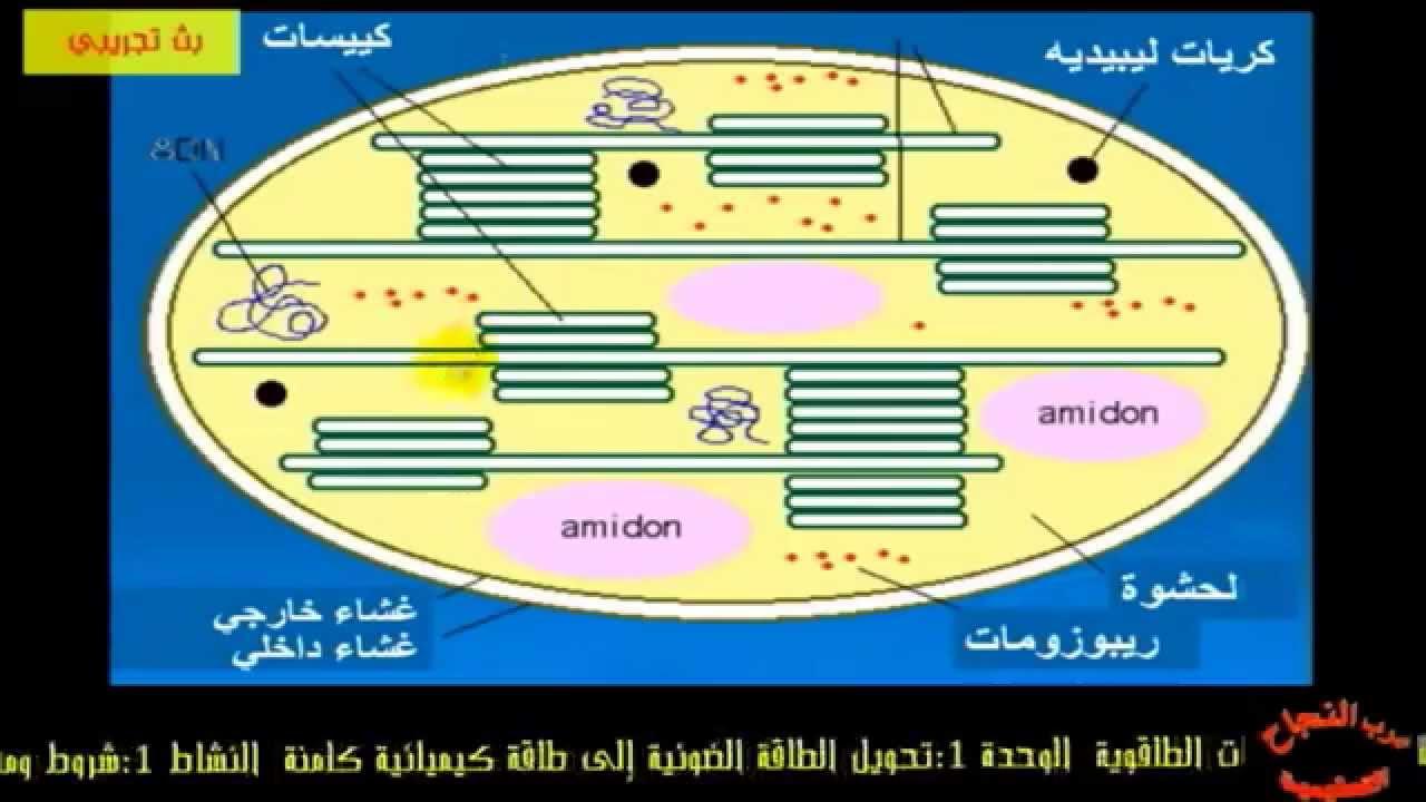 3as youtube - Resume De Science 3as Algerie