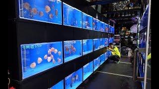 !!! Цены в Латвии на аквариумных рыбок !!!