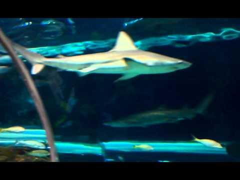 Ripley's Believe it or not aquarium Gatlinburg Tennessee ...