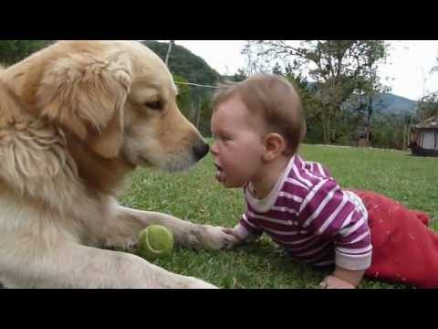 A Golden Retriever, a Baby and a Tennis Ball