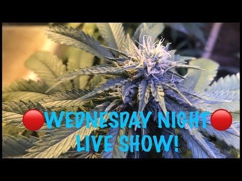🔴Wednesday Night Live Show - Amazon Ships 65 Pounds of Weed, How to Choose a Strain and more!