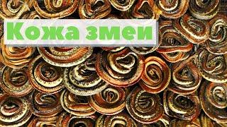 Как из кожи змеи делают сумки и туфли