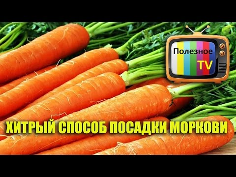 сколько стоит посадка 1 га морковки