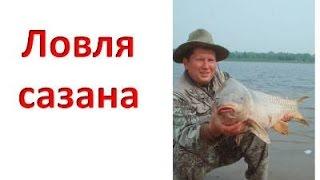 Ловля сазана. Ловля сазана с лодки(Ловля сазана. Истинной гордостью Волго - Каспийской дельты бесспорно является бронзовый красавец - сазан...., 2012-09-11T12:01:18.000Z)