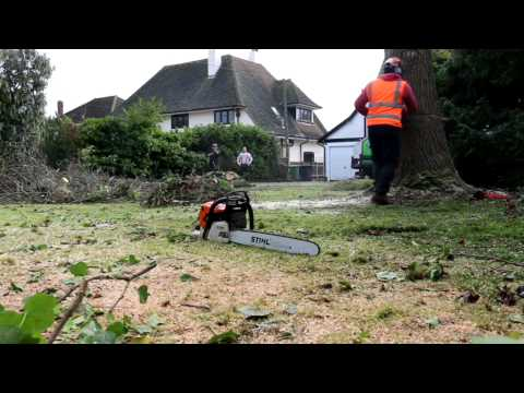 Tree Removal In Rochford, Essex.