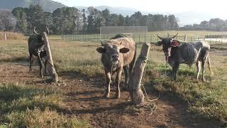 Download Mercado de Animales #14 Mp3 and Videos