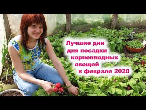Когда посадить редис и картофель в феврале 2020 года? Выбираем лучшие дни для корнеплодных овощей