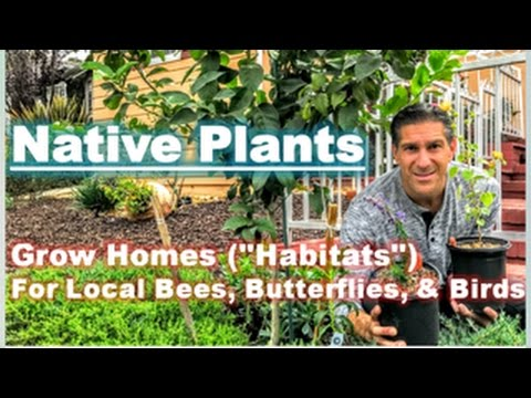 Part 3 of 3 | SAVE THE WORLD WITH YOUR HOME GARDEN | Native Plants Support Your Local Ecology