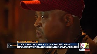 Man believes dog was shot as retribution for his 'snitching'