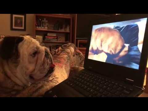 reuben-the-bulldog-what-kind-of-sorcery-is-this