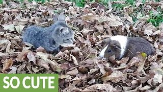 This is one of the most adorable animal friendships we have ever se...