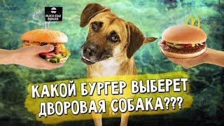 Какой бургер выберет дворовая собака? BLACK STAR BURGER МАКДОНАЛЬДС СОБОЛЕВ БУРГЕР BURGER KING