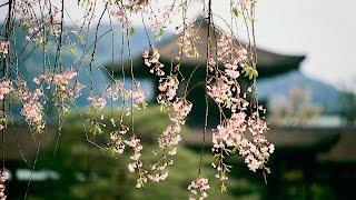 NMB48木下春奈の「ゲイシャ・ワルツ(石川さゆり)」をオカリナで吹いて...