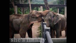 Elephant Rescued From Giving Rides | The Dodo