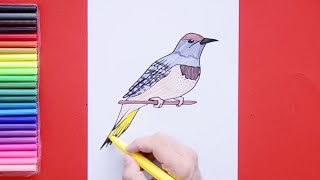 How to draw Yellowhammer - State Bird of Alabama