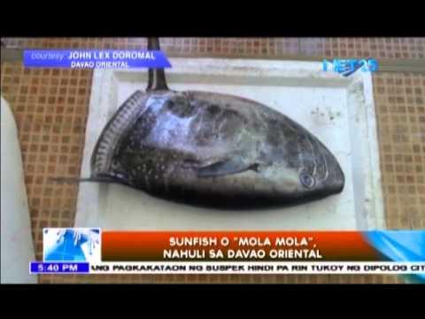 "Nahuli ang ""world's heaviest bony fish"" sa Davao"