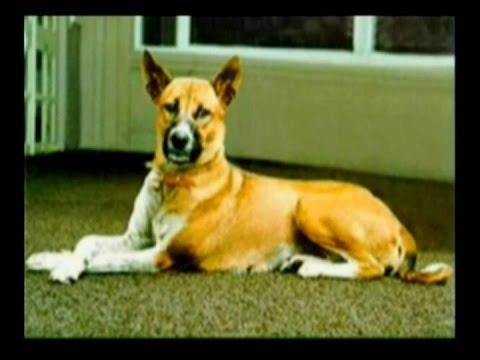 """""""ท่านใหม่""""เผย""""คุณทองแดง""""สุนัขทรงเลี้ยงเสียชีวิตแล้ว อายุรวม 17 ปี 1 เดือน 9 วัน"""