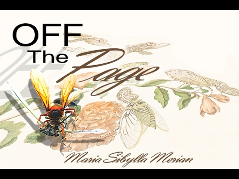 Off the Page - Maria Sibylla Merian