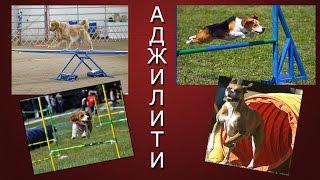 Аджилити   Полоса препятствий для собак