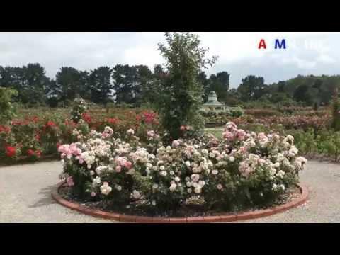 Victoria State Rose Garden Melbourne Werribee