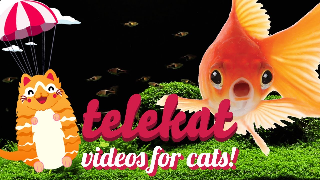 Fish tank tv videos for cats to watch telekat by miaow for Fish videos for cats