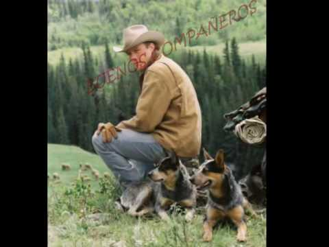 Ganadero Australiano (Australian Cattle Dog)