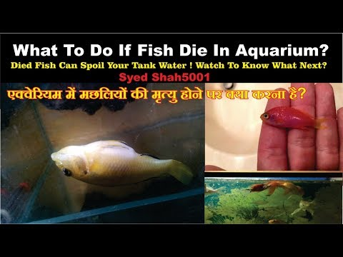 FISH DEAD IN TANK! What To Do If You Find Dead Fish In Aquarium