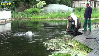Action! Große Störe werden ins Kaltwasseraquarium umgesetzt!