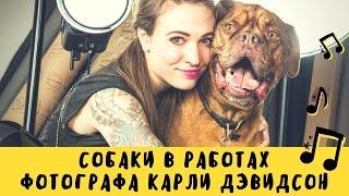 Собаки фотографа Карли Дэвидсон