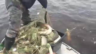 ЩУКА-ШОК !!! Рибалка мережею на Іртиші fishing with nets.