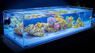 Shallow Reef Tank Update and Coral and Fish Unboxing (Month One)