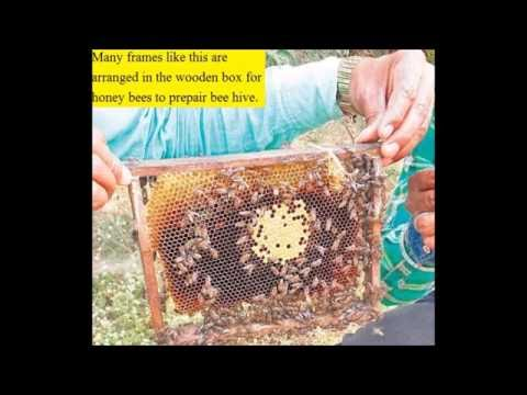 Big Income from Harvesting of Honey or Honey Bee Farming|Earn 12 lakh by Bee keeping & Marketing.