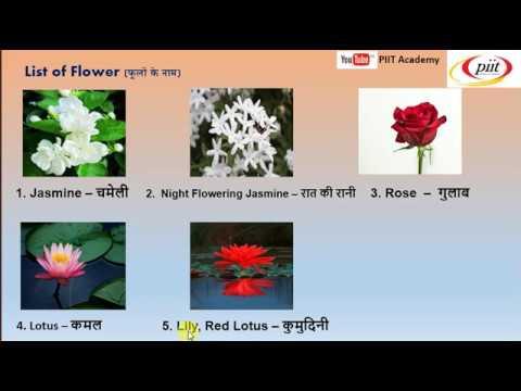 Flowers Name For Nursery Lkg Ukg English Learning Hindi Youtube