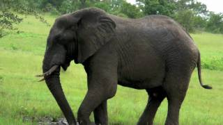 HD - Elephant Mud Bath - Rattray's on Mala Mala