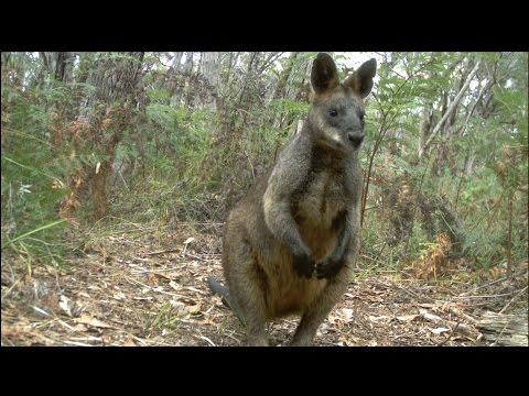 Camera Trapping Wildlife Surveys